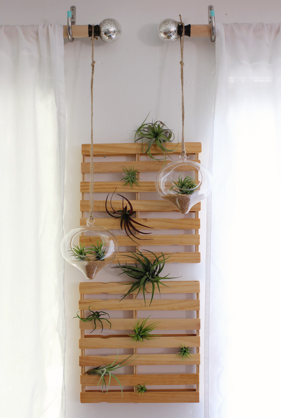 More air plants a giveaway at home in love for Air plant holder ideas