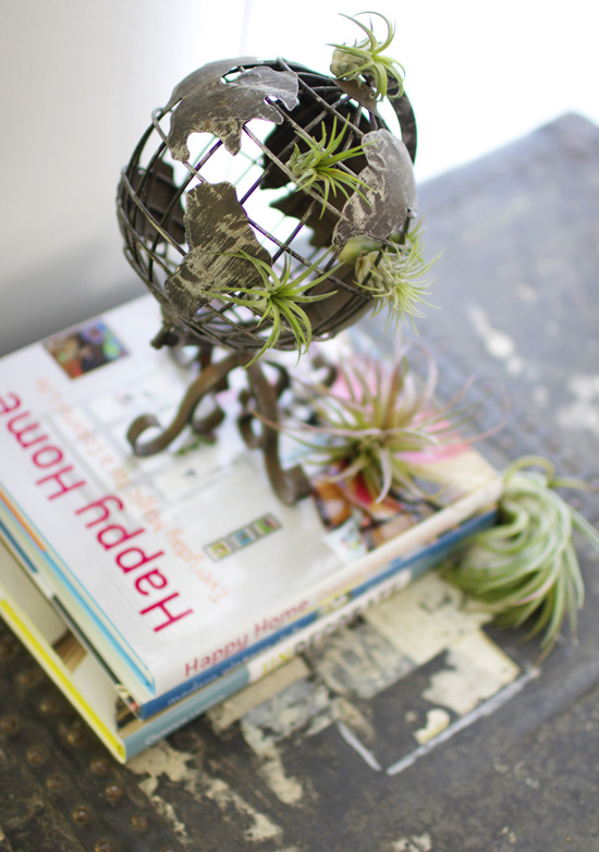 Air plants take over the world!