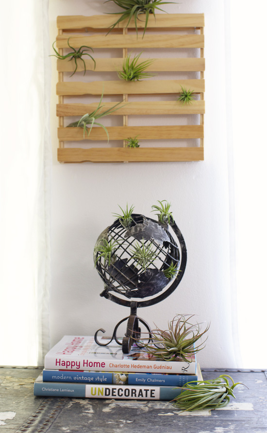 More air plants a giveaway at home in love for Air plant decoration