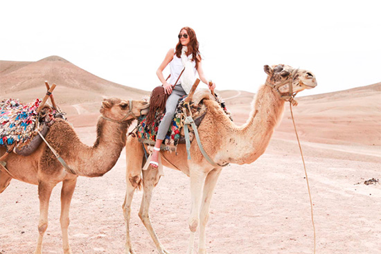 Camels - Morocco