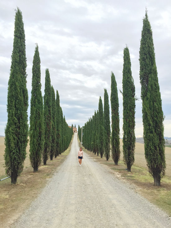 Cypress trees in Val d'Orcia, Tuscany