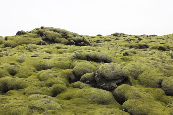 Mossy fields in Iceland