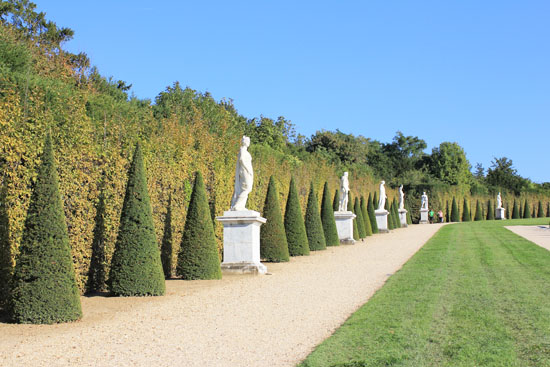 Manicured trees of Versailles