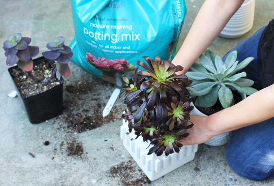 EcoScraps potting soil