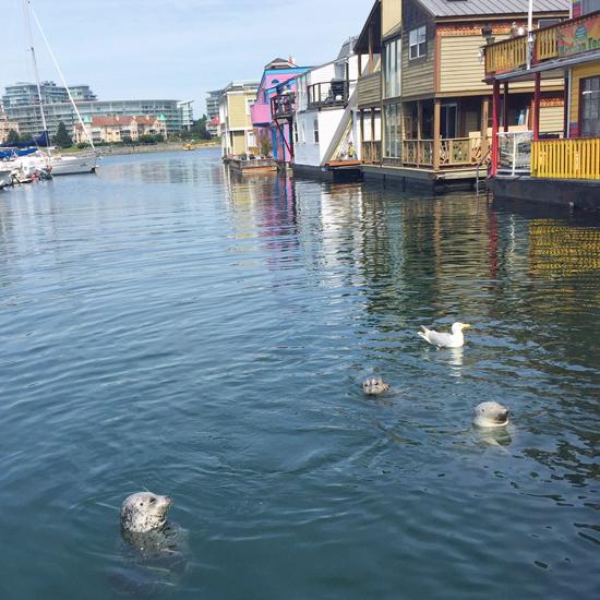 Seals at Fisherman's Wharf