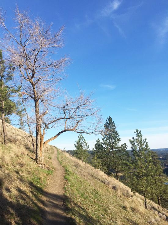 Spring in Spokane