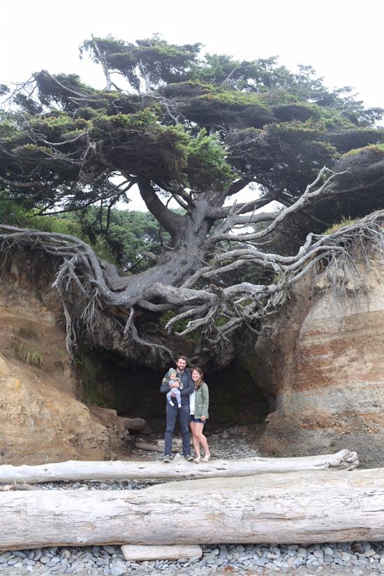 Tree of Life in Kalaloch, WA
