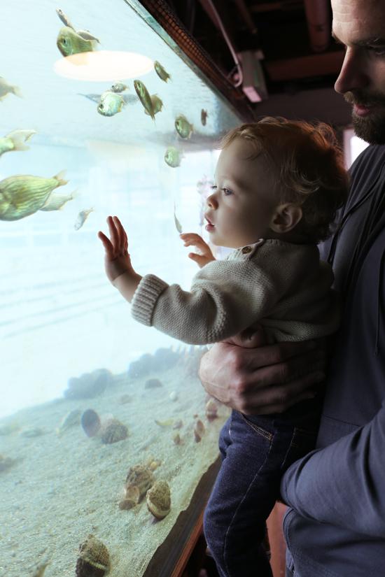 Free aquarium