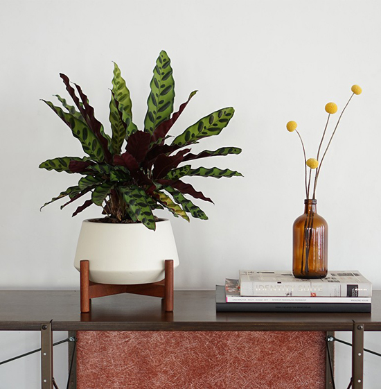 planter modern case grande desktop bowl study anthology pebble collections modernica